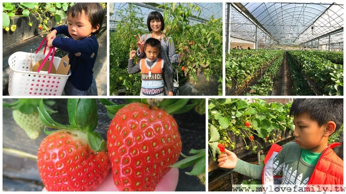 關西採草莓