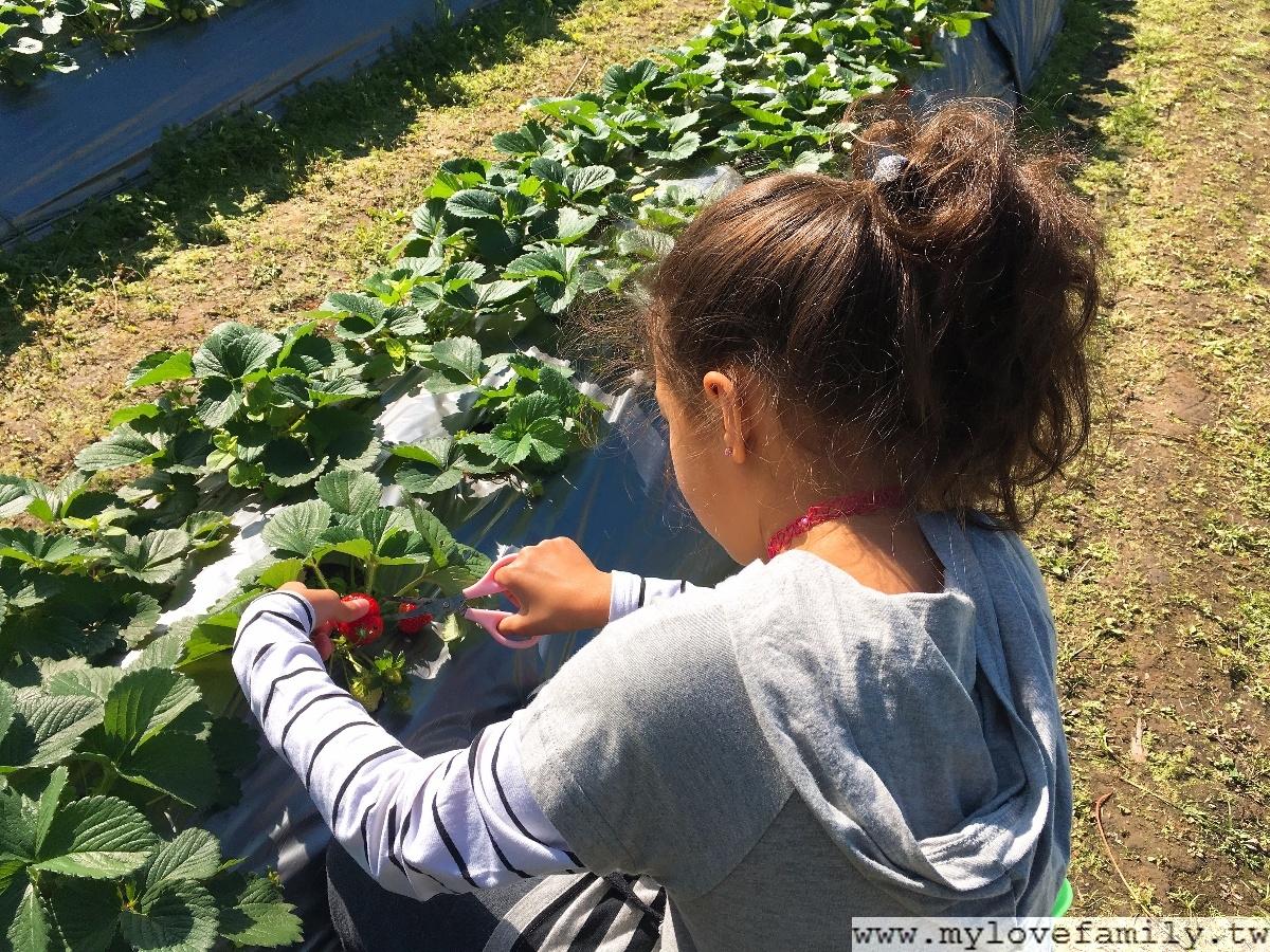 石門草莓園