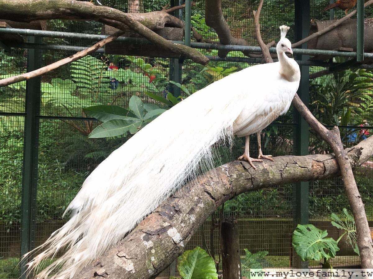 森林鳥地方
