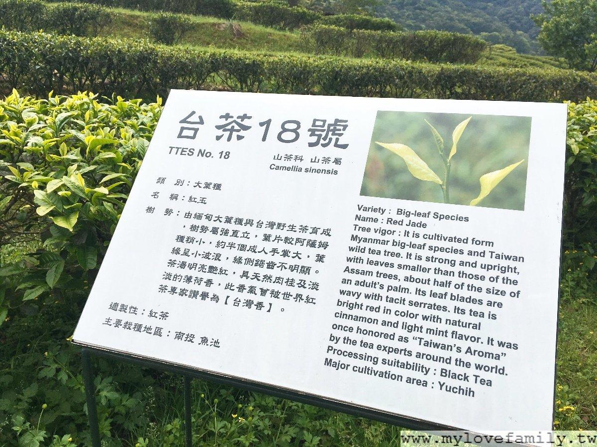 台灣農林熊空茶園