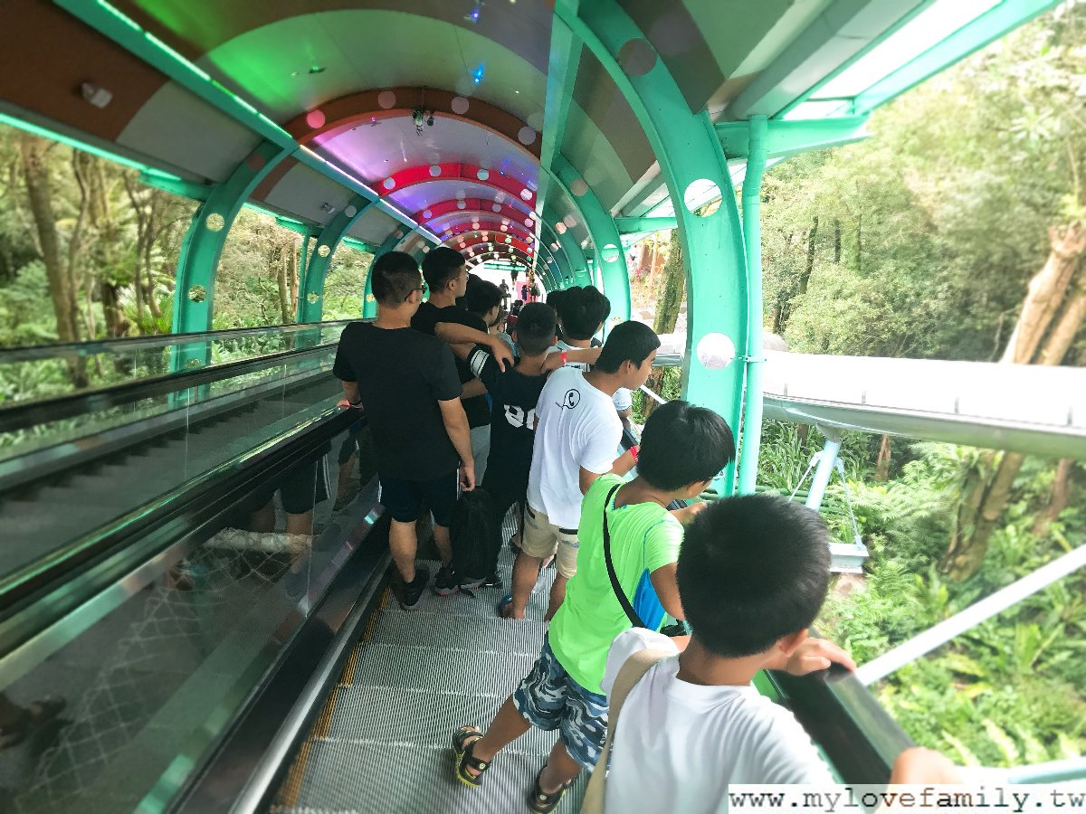 叢林S型溜滑梯