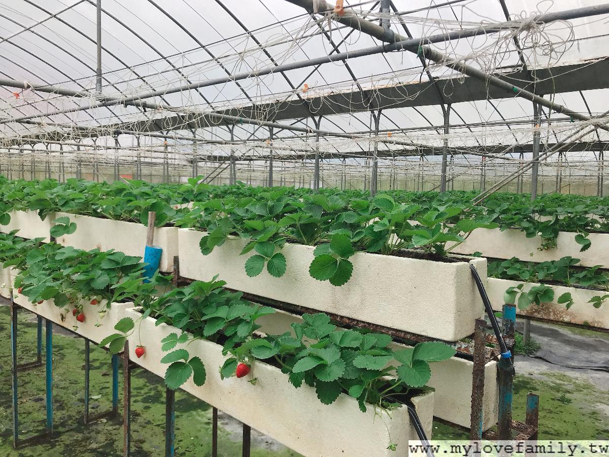 淼焱苗有機農場