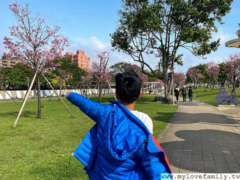 桃園櫻花季