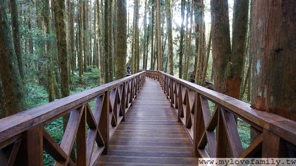 阿里山國家森林遊樂區
