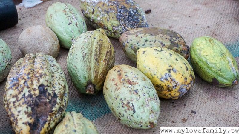 阿信巧克力農場